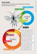Graphic: Insect Attlas 46 - Dying inside
