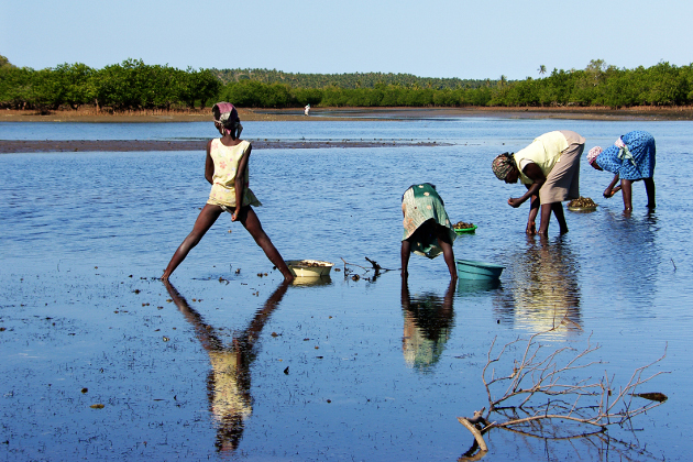 Gender and Climate Change: Mozambique Case Study | Heinrich