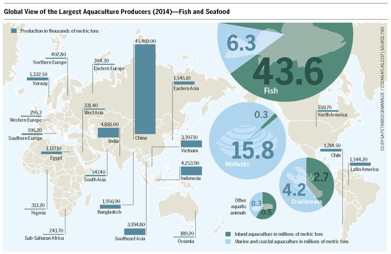 Aquaculture: Are Fish Farms the Future? | Heinrich-Böll-Stiftung